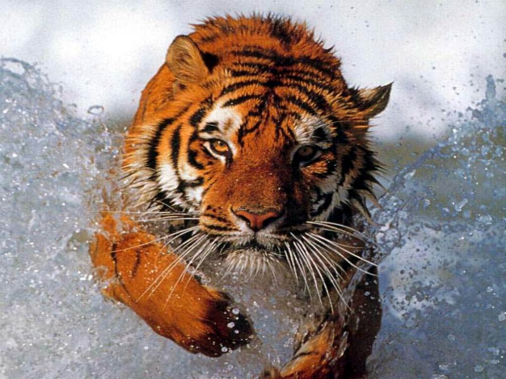 Fast & Furious tiger images