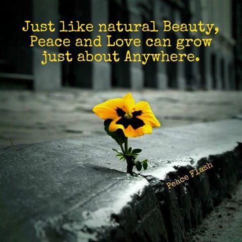 Just like natural beauty, peace and love can grow anywhere beauty quotes