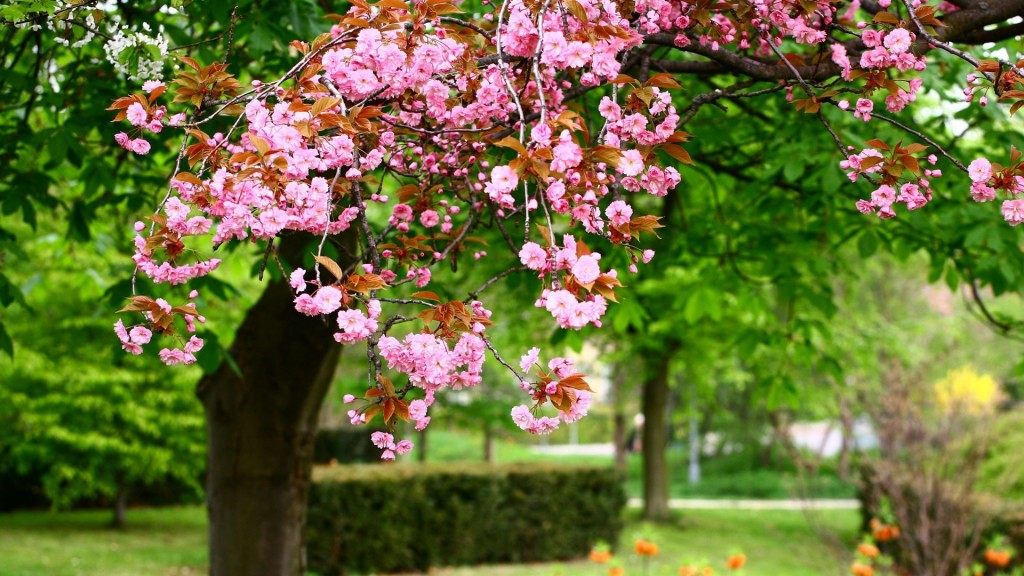 Beautiful spring pictures